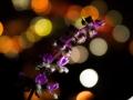 In the wake of Diwali's Night!